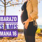 semana16. 150x150 - Mi embarazo mes a mes, semana 16