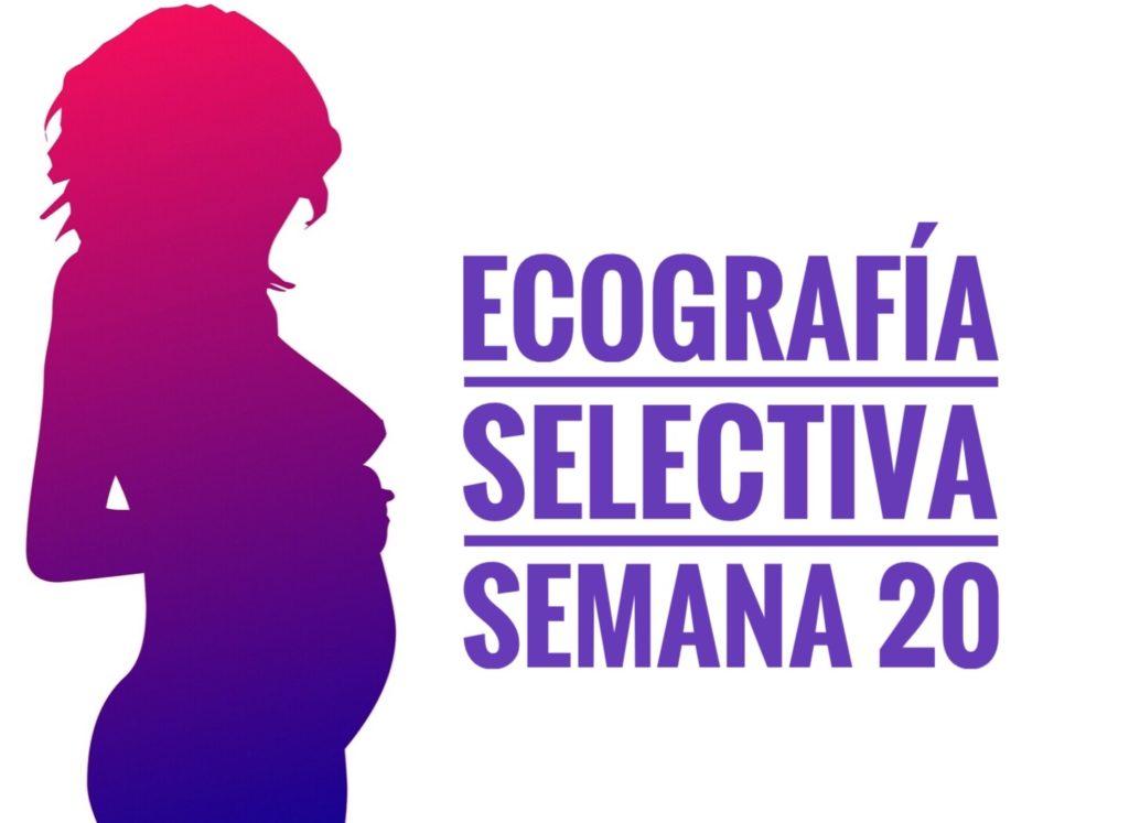 ecografia selectiva . semana 20 1 1024x747 - Ecografía selectiva. Semana 20