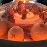 IMG 20190203 WA0006 150x150 - Visita a Jurassic World Exhibition en Madrid