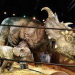IMG 20190203 WA0012 150x150 - Visita a Jurassic World Exhibition en Madrid