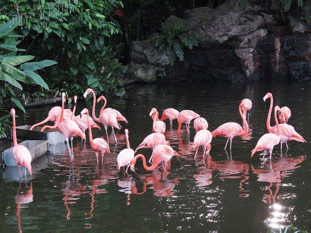 flamingo 2460461 640 - Los mejores planes de ocio para llevar a cabo con niños en Madrid